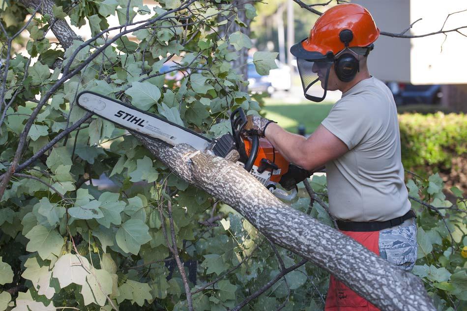 The man use stihl chainsaw