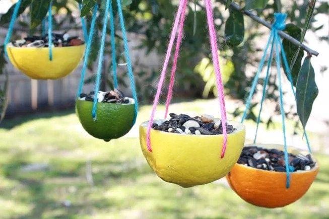 Bird Feeder With Citrus Peels