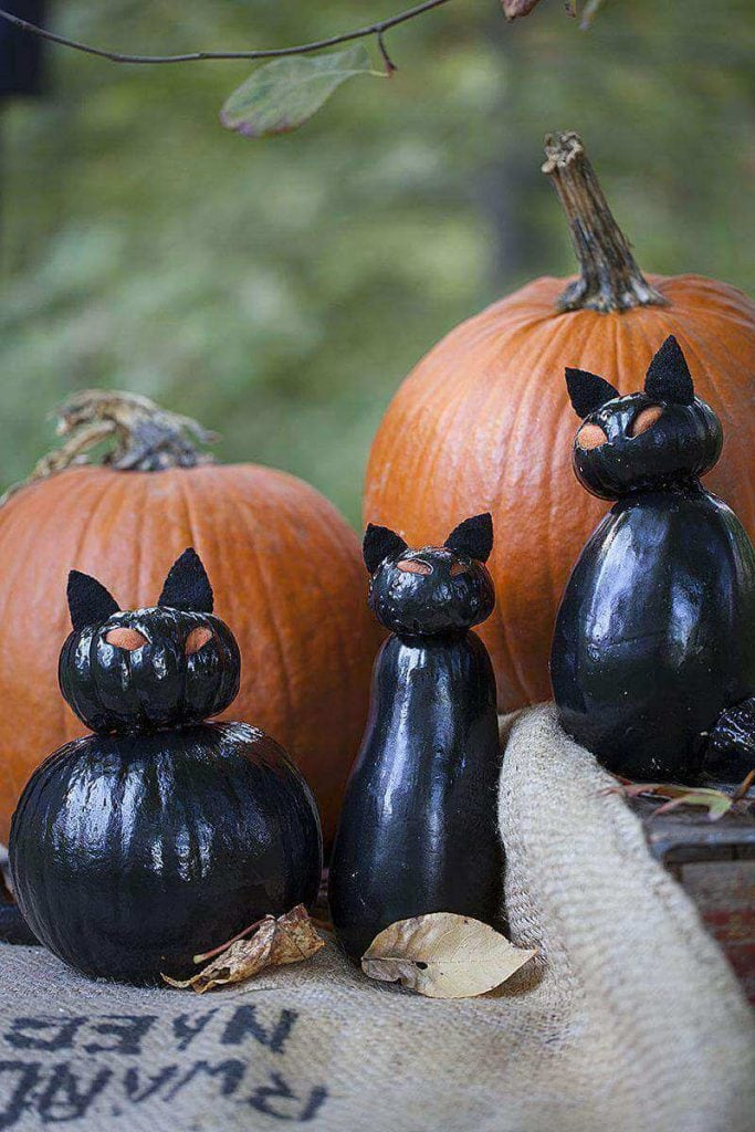 Black Pumpkin Cats