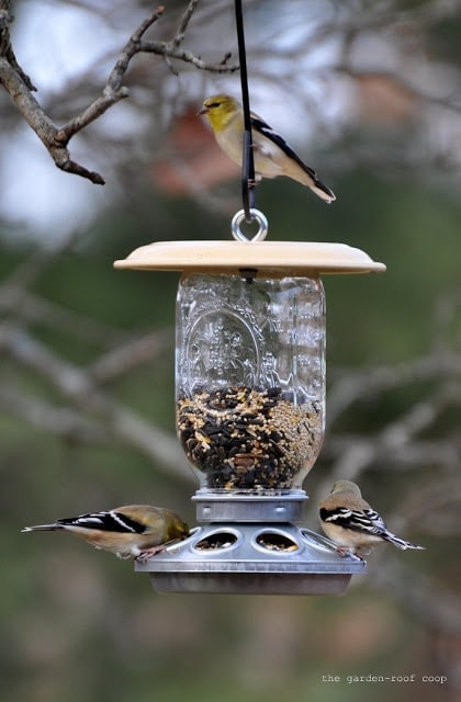 DIY Chick-Bird Feeder