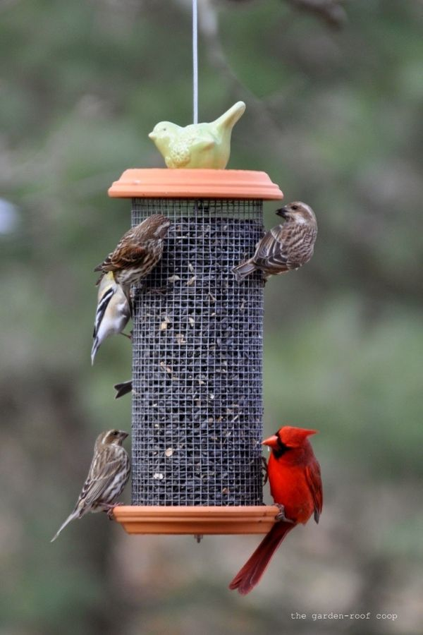 DIY Sunflower Tower Bird-Feeder